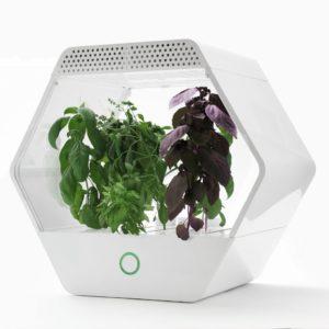 Semplice e intuitiva: con la app di Linfa, gestire il tuo orto domestico non è mai stato così facile